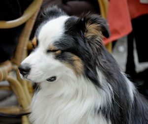 trump_dog